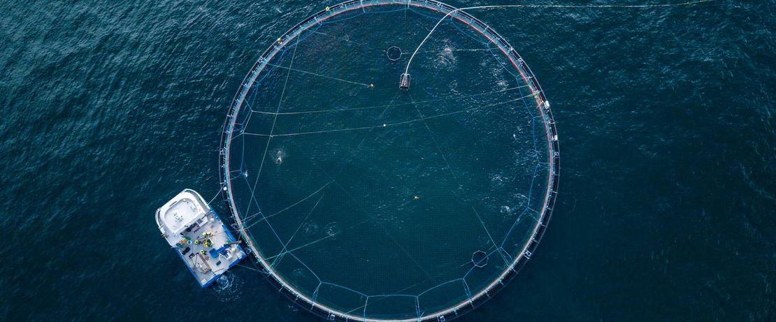 Aquaculture increasingly meet the rising global demand for fish.